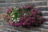 Full-Flowers