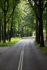 Netherlands (Road to Arnhem)