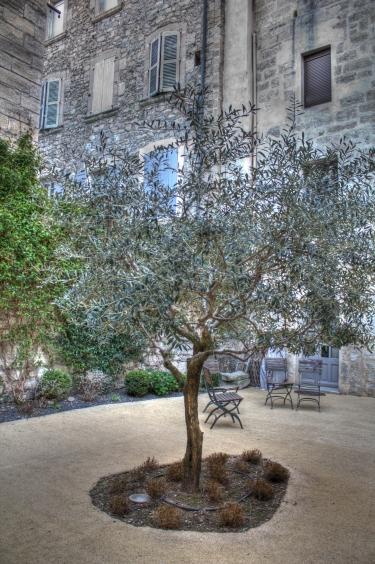 Apartment Olive Tree