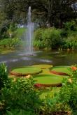 Big Lily Pads