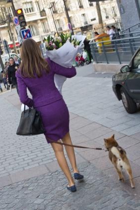 Fancy Dog Walk