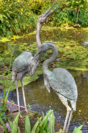 Friendly Herons