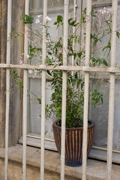 Jailed Plant