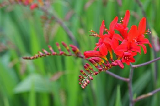 red flower5