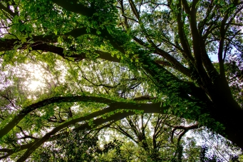 Sun Peaking Through the Trees