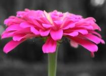 pink flower 5