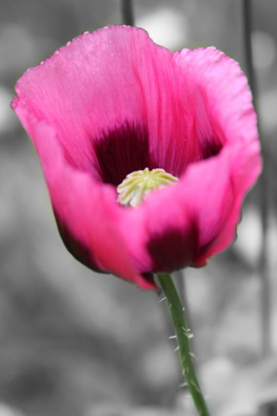 pink flower13