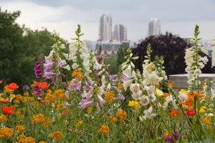 Urban-Nature