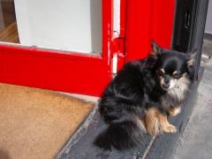 Watchful Puppy