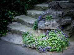 Floral Steps