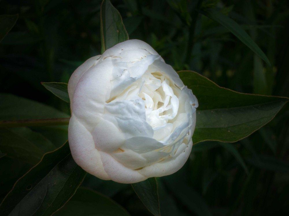 Ready to Blossom