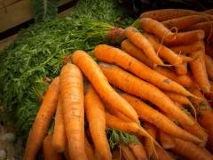 Carrots-1662